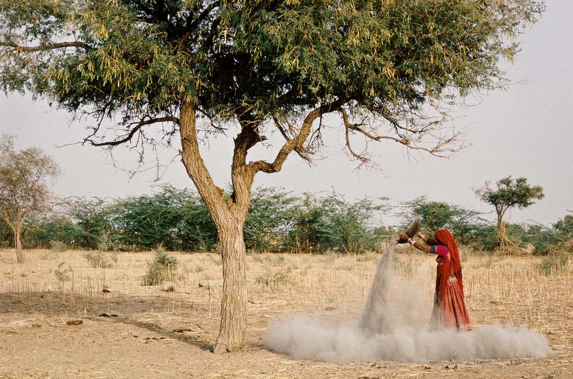 Ashes under Khejeri tree, 1991 Rajasthan